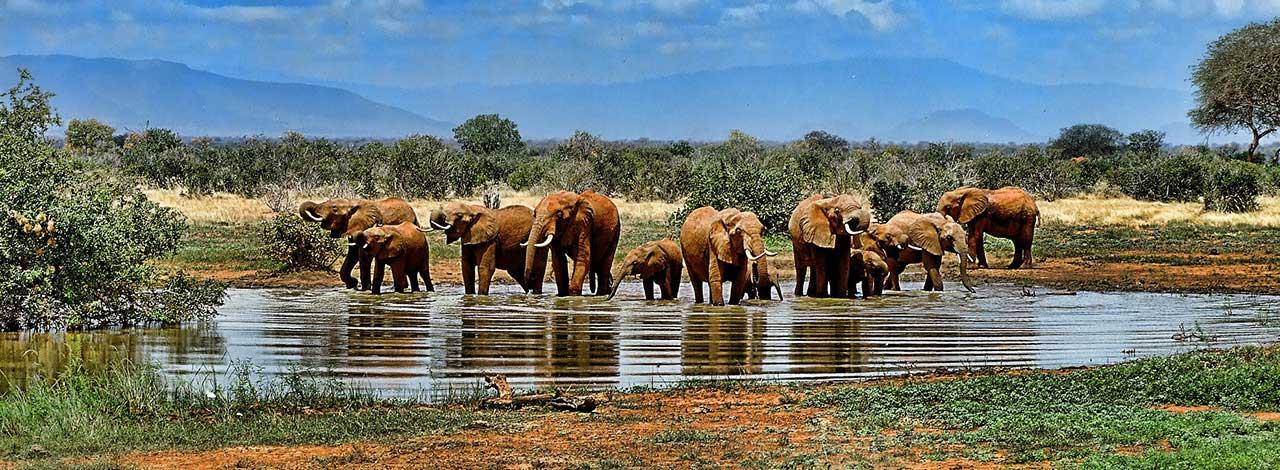 Classic-Safari-2020-elephants