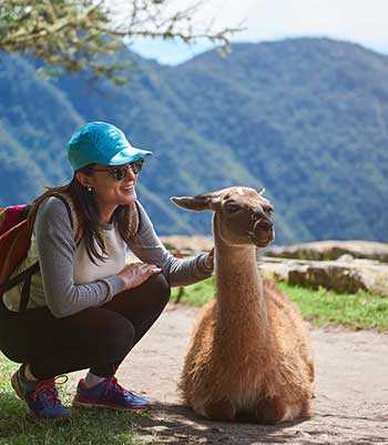 Amazon River Cruise LLama encounter