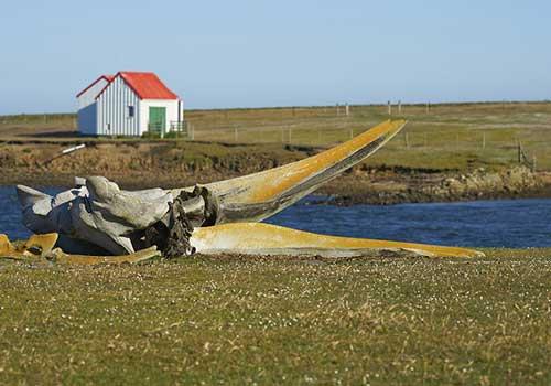 Cruise-Sale-Falklands