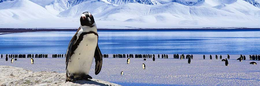 Luxury-Expedition-Antarctica