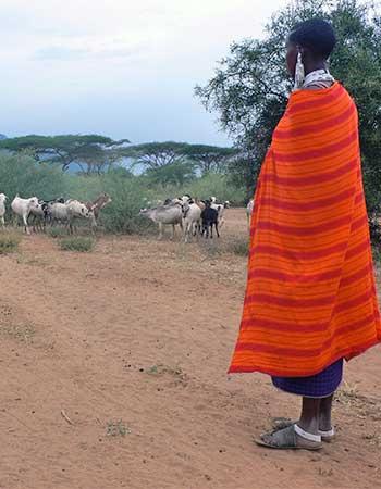 Tanzania-herding goats