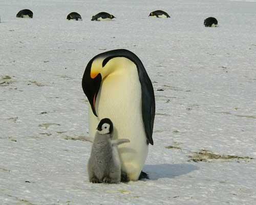Free Flights - Hurtigruten Penguin