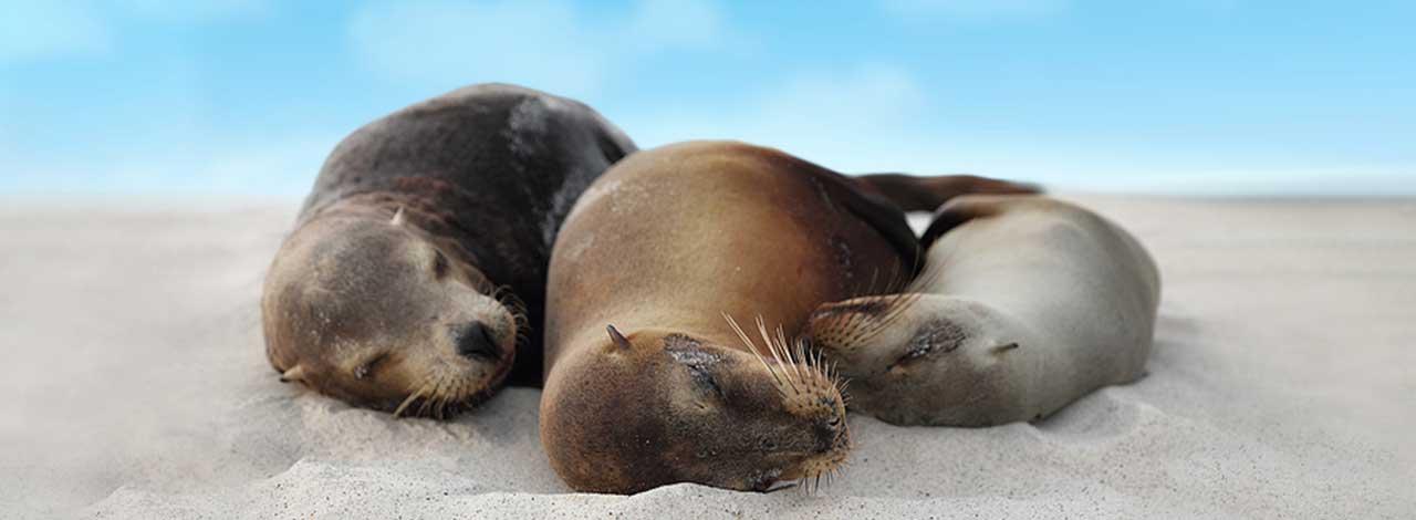 Galapagos-Free-Roundtrip-Air---Header